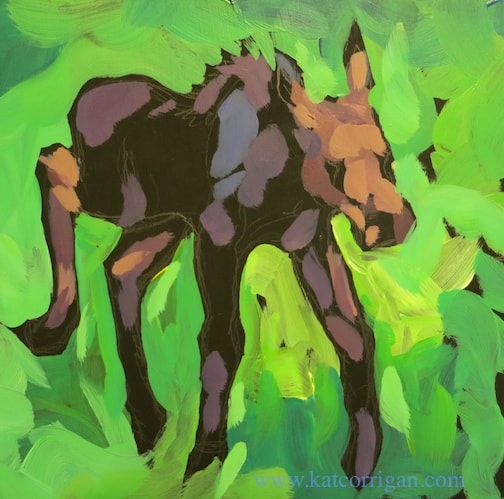 baby-moose-from-the-zoo6x6sm814